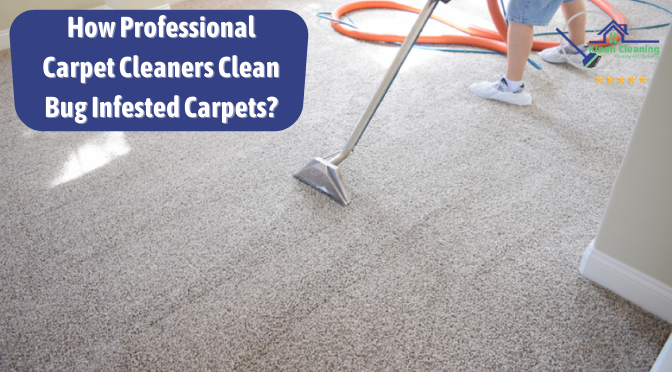 How Professional Carpet Cleaners Clean Bug Infested Carpets?